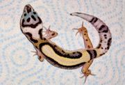 Leopardgecko NZ 2021