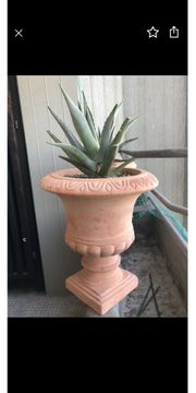 Agave in Terracotta Topf