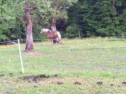 Sommerweide für Kleinpferde