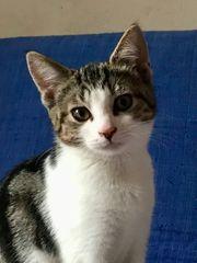 Vier gesunde soziale Kätzchen wollen