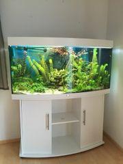 Suche Aquarium und Fische