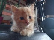 kitten Katzen Baby rote Kater