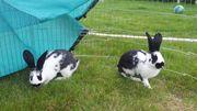 2 Hasen wenn erwünscht Stall