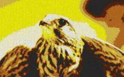 Vorlage für Ministeck Falke 80x60cm