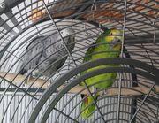 Papagei Pärchen mit Papieren