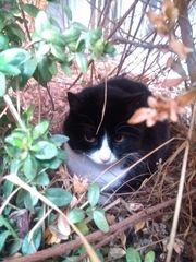 SNOOPY - ältere Katzenlady sucht neues