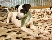 XÜSCHA - verspieltes Terrier-Mix-Welpenmädchen geb Dez
