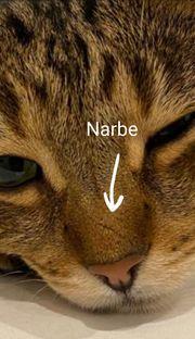 Getigerte Katze vermisst entlaufen wo