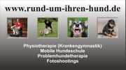 Mobile Hundeschule Problemhunde Hundephysiotherapie Fotoshootings