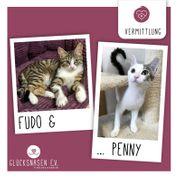 Kätzchen Fudo und Penny packen