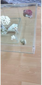 Das Einzelstück Glas-Tisch mit oder