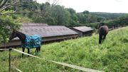 Pferdebox fuer Kleinpferd in Musberg
