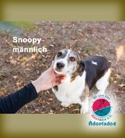 Snoopy - wo ist mein Charly