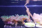 Verschiedene Korallen alle 5 Euro