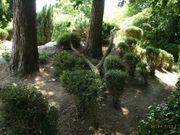 Gartenarbeiten in Coronazeiten