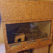 Holz Terrarium mit Deko Rückw