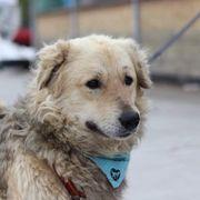 Tierschutzhund Koko sucht ein liebevolles