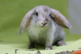 Niedliche Zwergwidder-Babys aus Hobbyzucht: Kleinanzeigen aus Frankfurt Bockenheim - Rubrik Kleintiere