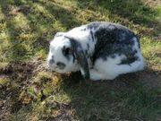 verschiedene Kaninchen Damen suchen dich