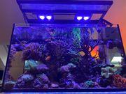 Meerwasseraquarium RS Reefer 250 komplett