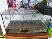 Wasserschildkröte mit oder ohne Becken