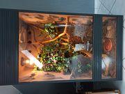 Terrarium mit 2 Kornnattern