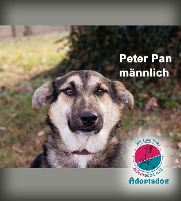 Peter Pan - kommt aus dem