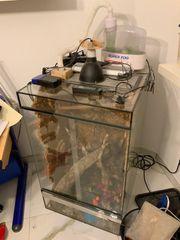 hochkant Glasterrarium 60x60x100 mit Korkwänden