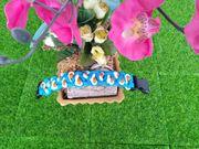Blue s Drachen Parade Hundehalsband