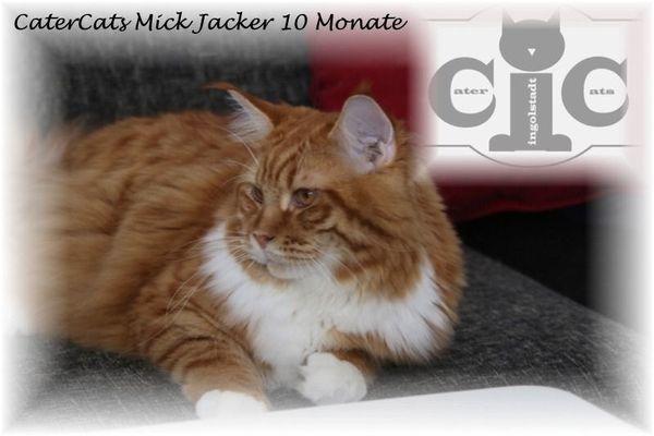 Deckkater CaterCats Champion Mick Jagger