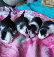 Wunderschöne Katzenbabys suchen bald ein