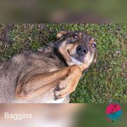 Baggins - Ich leg mich dir