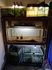Aquarium Anlage
