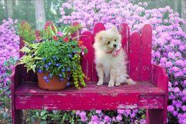 Hunde Salon HundePension Momo Hundebetreuung: Kleinanzeigen aus Nürnberg - Rubrik Hunde