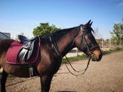 Wie ein eigenes Pferd