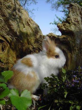 Kleintiere - Wunderschöne Zwergkaninchen