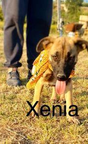 Schäferhund-Mix Welpen suchen ein Für-Immer-Zuhause
