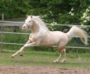 Grundstück zur ganzjährigen Pferdehaltung ab