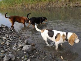 Bild 4 - Hundebetreuung Gassiservice Tagesbetreuung Urlaubsbetreuung - Lauterach