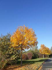 Zu Zweit in den Herbst