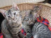 Süße kleine Kätzchen abzugeben