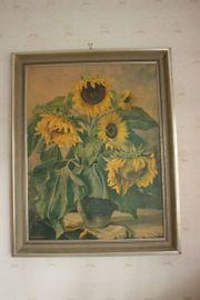 Sonnenblumenbild