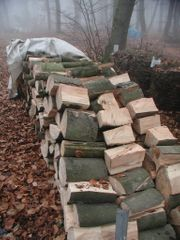 Brennholz Buche ca 5 m³