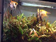 Pflegeleichte Aquarium Pflanzen