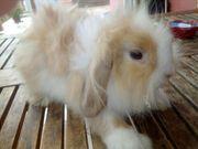 einige Gunstige Kaninchen abzugeben