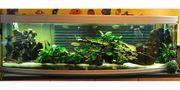 Süßwasseraquarium inkl Zubehör und Fische