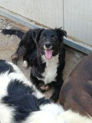 Labrador-Mix 6 Monate alt sucht