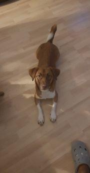 Liebevoller Familienhund sucht neues Zuhause