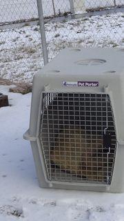 Hundebox Transportbox mittlere Hundegröße in