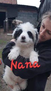Nana sucht ein liebevolles Zuhause